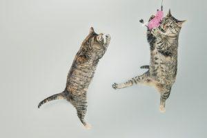 katte i leg